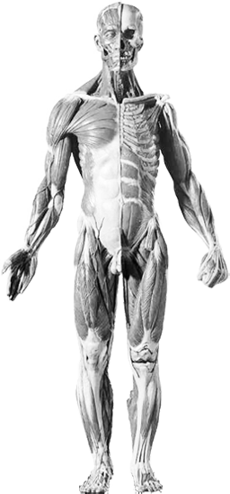 Mylogenics Body